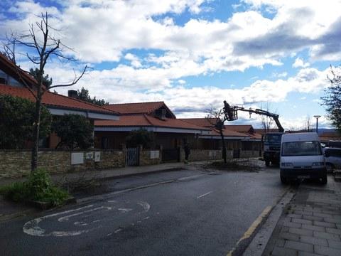 Estamos podando los árboles de la parte alta de Domingo Iturbe